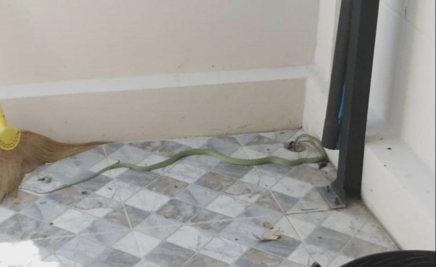 งูเลื้อยเข้าบ้าน